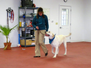 Robyn and Jack training